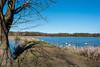 Kleiner Bischofsweiher - Baum und Schwäne 6197 (Peter Goll thx for +6.000.000 views) Tags: 2018 dechsendorf kleinerbischofsweiher natur erlangen germany swan lake pond d750 nikon nikkor weiher see tree water wasser