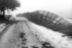 Trees and Fences of Misty Day: 3 (sistawar) Tags: fence mist monochrome misty bw