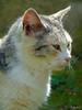 La primavera en villa lechuzo (ramirezariascristian1994) Tags: naturaleza animals animales felinos gatos terreno