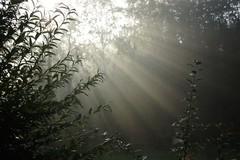 *** (pszcz9) Tags: polska poland przyroda nature natura liść leaf słońce sun poranek morning światło light mgła fog mist jesień autumn pajęczyna spiderweb cobweb beautifulearth sony a77
