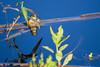 frog reflection (Jillian Kern) Tags: frog pond reflection blue green wildlife water