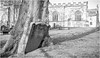 Barnard Castle . (wayman2011) Tags: fujifilm23mmf2 lightroomfujifilmxprp1 wayman2011 bw mono rural churches gravestones graveyards trees pennines dales teesdale barnardcastle countydurham uk