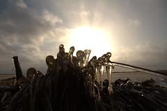 Cold morning marts 17-2018 (Flemming Pedersen) Tags: canon canon7d canon1585mmf3556 denmark danmark skjern skjernå natur nature naturaleza natura morgen morning morgensol lønborg hestholm
