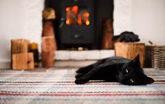Toast (the family cat) (Moorebig50) Tags: ilobsterit cat catinfrontoffire woodburner woodburnercat fire catrestinginfrontoffire blackcat