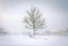 Snowy day on dartmoor (Explored #1!) (s.pither) Tags: dartmoor devon landscape snow splittone tree