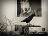 Still life with horse, bird and camera (Jenny!) Tags: stillife sepia camera prinsenbox escher crow horse