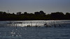 negombo rivière et magroves (ver-20100) Tags: srilanka mangrove asia river rivière lagon pèche fisher boat bateau