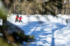 Off-track skiing on a forest pond (VisitLakeland) Tags: metsäkartano snow winter finland rautavaara outdoor ski skies hiihtää offtrack umpihanki umpihankihiihto talvi lumi forest nature maetsä luonto metsä