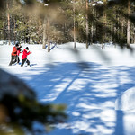 Off-track skiing on a forest pond thumbnail