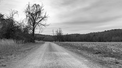 Gloomy Day (Mr. Low Notes) Tags: eosm bw blackandwhite monochrome landscape outdoors trees nature