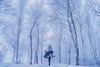 in white (AZURE_TB) Tags: snow winter birch dollfiedream sony dscrx1r rx1r