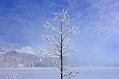 Tree (majka44) Tags: slovakia winter travel landscape forest country hightatras lake frozen