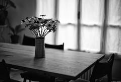 Derrière le rideau (Mathieu HENON) Tags: leica leicam m240 noctilux 50mm noirblanc nb blackwhite monochrome stilllife naturemorte bouquet anémones table rideau