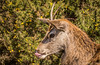 If the wind changes, you'll stay like that! (donnasmith13) Tags: animal antler antlers brown buck cervus cervuselaphus countryside deer elaphus fauna foliage forest male mammal nature one outdoor outdoors red reddeer stag standing uk wild wildlife