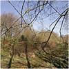 propsteier wald 15 (beauty of all things) Tags: eschweiler stolberg propsteierwald filigrangestrypp zweige twigs