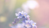Vernal beauty (marcmyr) Tags: flower nature pastel natur nikon d610 colorful spring springtime warm soft bokeh dof depth field dreamy