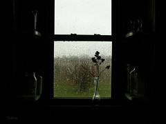 Looking out the Kitchen Window on a Rainy Day (SteveFromOhio) Tags: kitchen window rain weather vase jars glass windowsill burdock burrs view screen drops