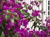 DSC06822 (familiapratta) Tags: sony dschx100v hx100v iso100 natureza flor flores nature flower flowers