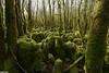 lapiaz du bois de Charnay - Rurey (francky25) Tags: lapiaz du bois de charnay rurey karst franchecomté doubs explo