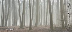 Nebel (Wunderlich, Olga) Tags: rügen putbus schnee bäume landschaft natur deu winter