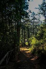 Naturaleza (clauseLUNA) Tags: viajar conocer bosque naturaleza fotoclauseluna
