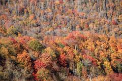 IMG_3759_Smoky Mountains (Alex Hsieh (椰子人)) Tags: ç´è² smokymountains smokymountainsnationalpark nationalpark 2016 fall fallfoliage autumn roadtrip travel tennessee northcarolina tn usa canon canon6d 6d