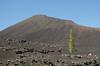 Sólo frente al volcán (inma F) Tags: chinyero garachico arbol excursion excursión lava paisaje volcan sendero tenerife vulcano camino tree pine landscape teide canary hike canaryisland canarias island