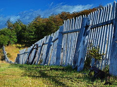 Seriously Leaning Picket Fence (nelhiebelv) Tags: fence picket puntaarenas chile wooden