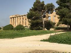 IMG_6001 Selinunte (35) (archaeologist_d) Tags: sicily italy selinunte archaeologicalsite archaeologicalruins templee templeofhera