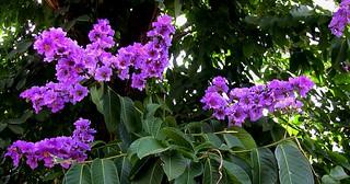 Indonesien, Java, Blüten bei Yogyakarta, 17372/9920