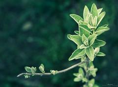 spring (aniribe) Tags: spring color green forest tree leaf light nature natureimagies nikon
