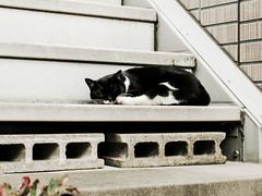 neko-neko2048 (kuro-gin) Tags: cat cats animal japan snap street straycat 猫 canon powershot pro1