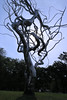 Stainless Steel Tree Art (Stacy_b_kc) Tags: sculpture art tree metal steel stainless nelson atkins
