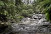 Leura Cascades (Eddy Summers) Tags: leuracascades leura bluemountains nsw australia landscape vibrant waterfall river long exposure trees foliage bushes rocks pentaxk1 pentaxaustralia smc24mm28 topaz pixelshift