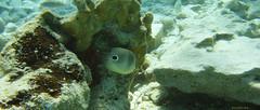 Fonds sous-marins de CUBA (francisaubry) Tags: plongée diving sony cuba