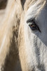 Toi...   -   You... (minelflojor) Tags: cheval yeux crinière cils poil tête horse eyes mane eyelashes hair head