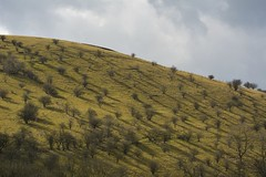 OssomsHill (Tony Tooth) Tags: nikon d7100 55300mm hill hillside countryside trees shadows ossomshill manifoldvalley wettonmill staffs staffordshire staffordshiremoorlands england landscape