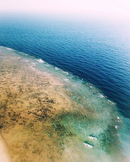 (coral reef)   Among the most famous beaches around Marsa Alam (located on the western shore of the Red Sea) is the Abu Dabab #beach. In Abu Dabab, turtles are a common sight, and it is nearly guaranteed that when #diving, one will see at least one turtle