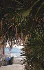 Un occhio di mare (Aellevì) Tags: scorcio verde azzurro barca discesa palma
