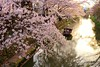 Hachmanbori Canal (maco-nonch★R) Tags: shiga water canal 堀 japanischer japanesephotographer japon japonés japan boat canon eosm5 cherryblossoms sakura twilight sunset