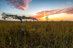 Dwarf Cypress Sunrise (J.Coffman Photography) Tags: everglades flamingopark sunrise dwarf cypress tree season wet preserve state fl sunshine wilderness hiking hike d810 nikon clouds marsh forest states united florida big national park landscape trees swamp water
