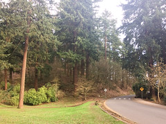 tabor park (dolanh) Tags: road mttaborpark firtrees trees