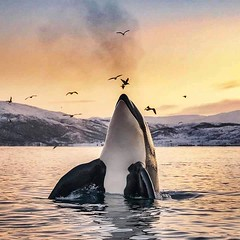 Follow me on Instagram🐋: giulia_cetto (alessandrocetto) Tags: sun light blue white cold nature animal beauty great photo pic amazing ice clouds sky water ocean arctic seascape orange sunset birds animals