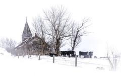 Waiting for spring (L E Dye) Tags: brushhill 2018 alberta canada church d5100 ledye nikon spring abandoned cows fence prairie rural snow