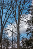 DSC00182 (johnjmurphyiii) Tags: 06416 clouds connecticut cromwell originalarw shelly sky sonyrx100m5 spring usa yard johnjmurphyiii