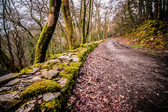 The Path (NikNak Allen) Tags: plymouth devon plymbridge tree trees moss branches leaves wall stone slate green mud