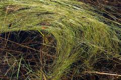 Loofles (johan wieland) Tags: 2018 kootwijk loofles spring veluwe voorjaar kootwijkerbroek gelderland netherlands nl