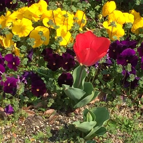 初町公園の花壇
