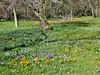 Frühlingswiese im Botanischen Garten (mama knipst!) Tags: krokus wiese blume flower fleur frühling märz natur