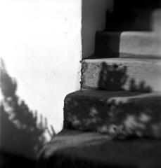Chassé-croisé (Rachelnazou) Tags: caffenol blackwhite brownieflash film ilford analog argentique